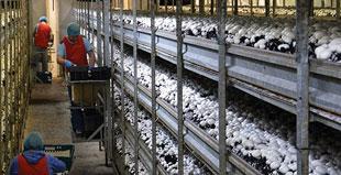 Sistemi di tracciabilità in produzione e trasformazione di funghi